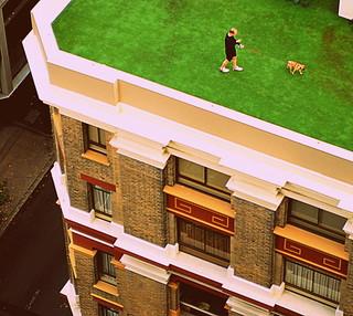 Dog Walking Jobs Sydney