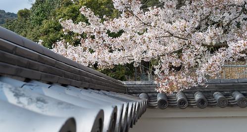 城壁と桜 2