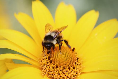 Aceites esenciales para picaduras de avispa o abeja
