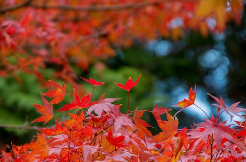 紅葉狩り - 東山公園 07