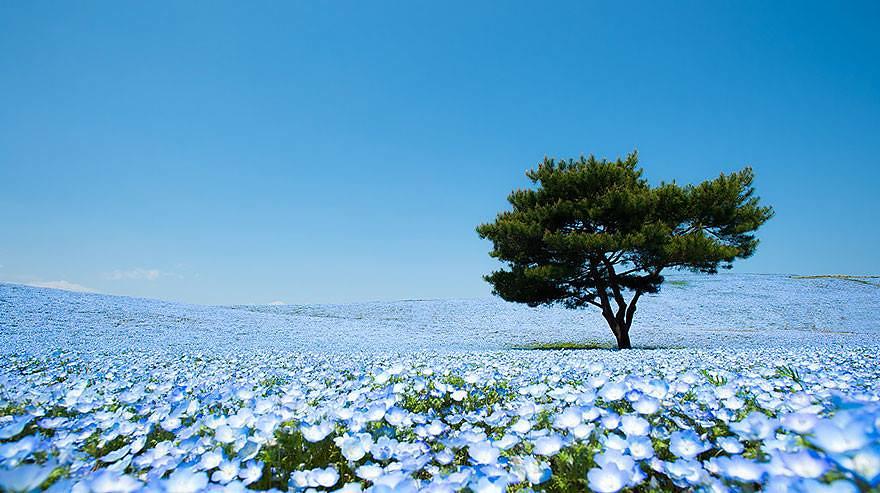 Parque Costero Hitachi en Japón