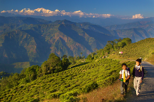 Living on Mountains of Tea - Darjeeling, India | by Daniel Peckham