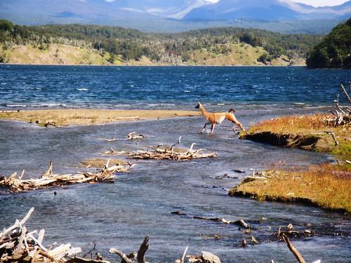 Desembocadura río Indio en el lago Yakush (foto mymflycast en flickr)