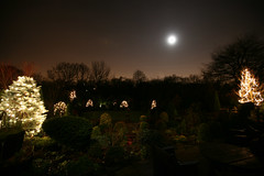 On the final day,  BBC TV filmed the upper garden tree lights (Day 6 December 7th) | by Four Seasons Garden