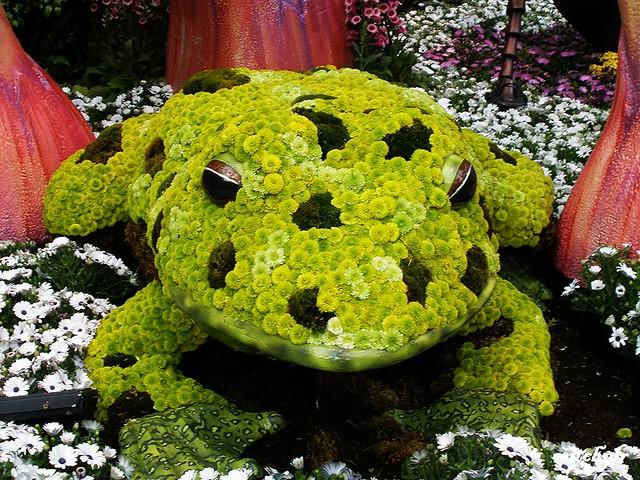 Flowering Frog