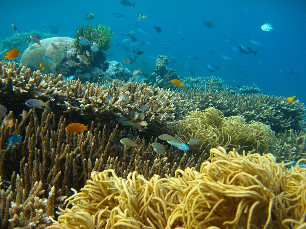 Isn't it a nice coral reef?
