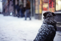winter dogs | by Alex and Nastya