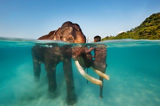Swimming Elephant - Andaman Islands, India | by James R.D. Scott