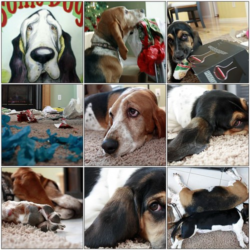 A Basset Hound Christmas | by StoryWorks by Suzette - Moving