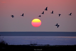 The early bird catches the flock of birds. | by kees straver (will be back online soon friends)