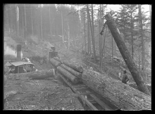 "Loading logs with ""Donkey"" 