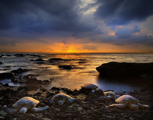 Hawaiian Turtle Sunset | by kevin mcneal