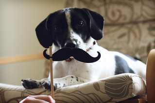 Dog with a Mustache | by ginnerobot