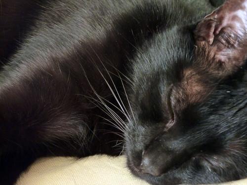 Cooper, sleeping