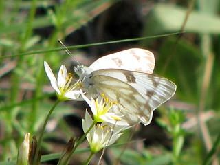 Cibolo Nature Center Plant Oicturesd