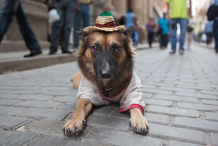 Dog with Hat | by Jonathan!