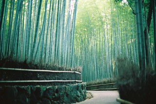 kyoto / bamboo forest | by Zoetrope :P
