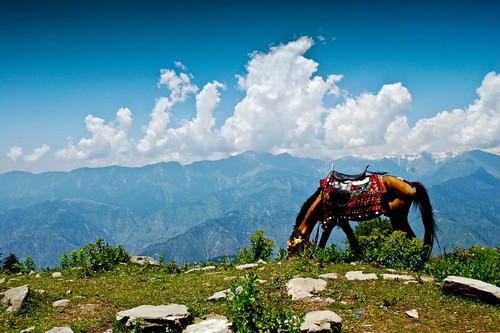 Shogran - Paya Meadows Top | by ShaukatNiazi