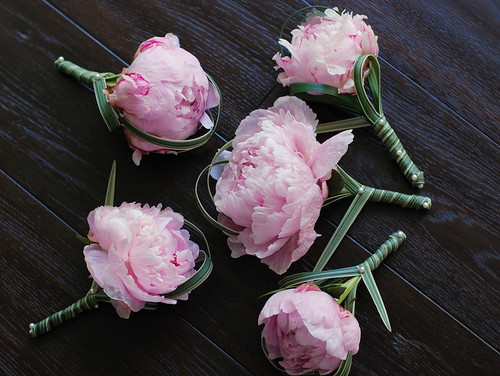 peony boutonnieres | by shirley77