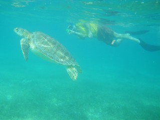 Turtle and Mike at Akumal | by hopefulist