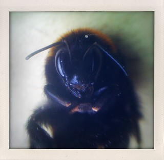 More Macro iPhoneography | by Sas & Marty Taylor