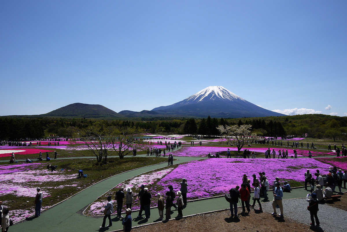 Hitsujiyama Park – Pink Part Of The World