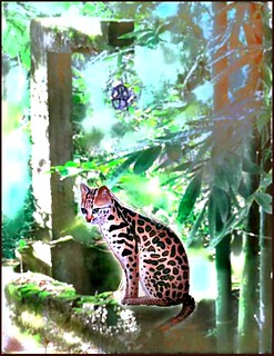 endangered ocelot at the old well | by MouradianR :)