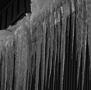 icicles | by cat_on_my_lap