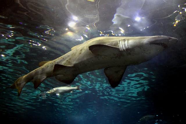 Qué hacer y ver en Barcelona - Aquarium de Barcelona