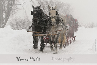 Sleigh Ride - Quebec Winter Carnival | by Thomas Michel