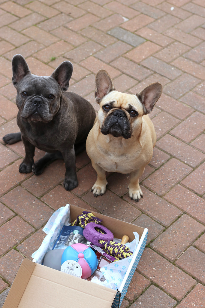 betty and burt, dog treats, french bulldog, french bulldogs, katelouiseblog, pawsome, pawsome box, pawsome box review, subscription box, katelouiseblogdogs,