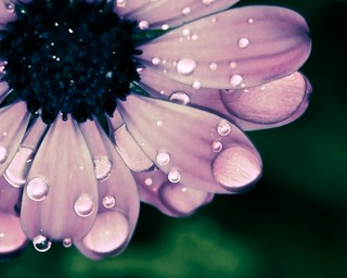 Flower wet | by @Doug88888