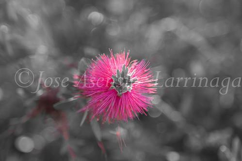 Flor #DePaseoConLarri #Flickr           -1319