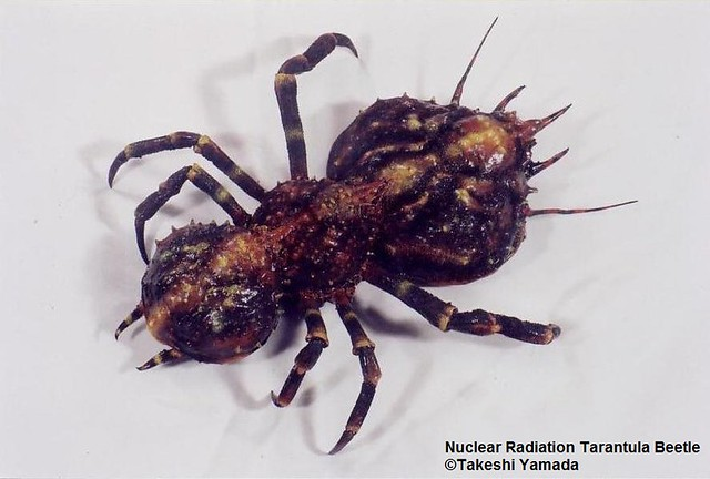 Nuclear Radiation Giant Stag Beetle