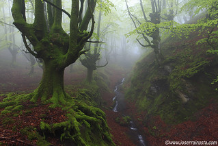 The revival of the forest / El renacer del bosque | by Joserra Irusta