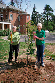 Planting a tree | by Sisters of Providence