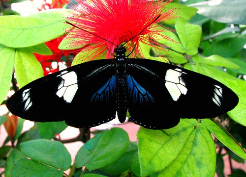 Butterflies Like Red | by Carl Neufelder