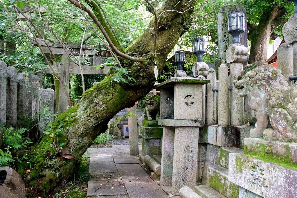 Fushimi Inari_19