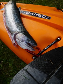 steelhead and kayak | by red alder ranch