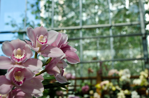 Orchids in Greenhouse | by Ed Coyle Photography