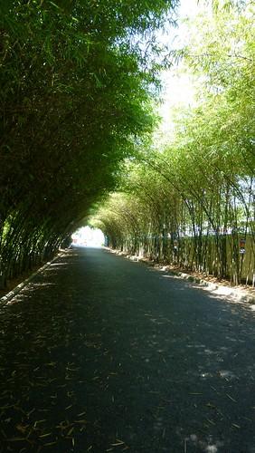 Koh Samui New Star Resort サムイ島ニュースターリゾート