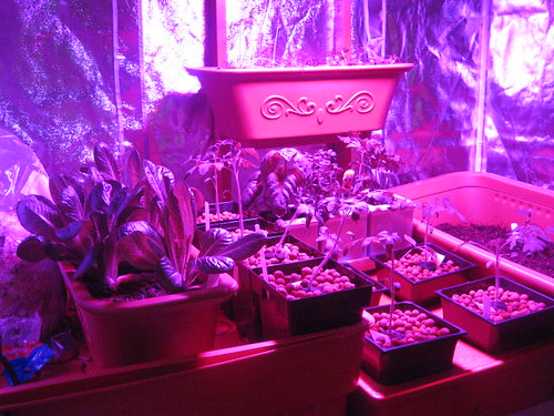 Led Grow Lights And Indoor Grow Tents Rooms Sydney Area