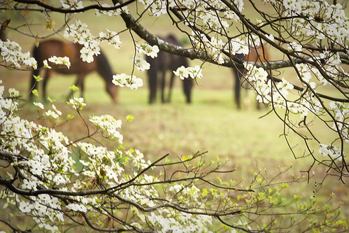 13/52- Just For Fun- Horsing Around in the Dogwoods | by Maureen Anne P