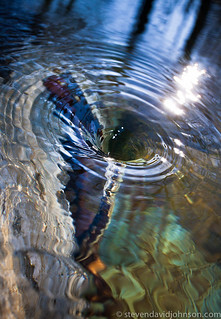 Whirlpool and funnel | by Steven David Johnson