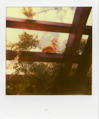 Leo - impossible project 680 | by Ronnie Fituci