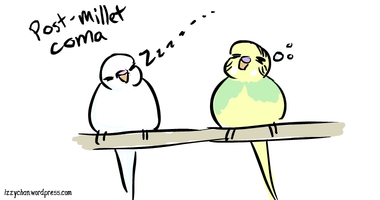 budgies white bird dennis sleepy