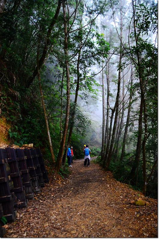 橫嶺山生態步道 2