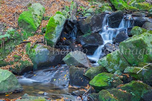 Parque Natural de #Gorbeia #DePaseoConLarri #Flickr      -1448