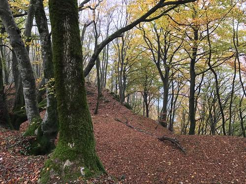Forêt de Chailluz