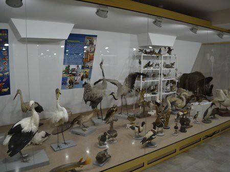eco museum obiective turistice ruse 6